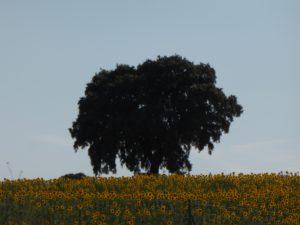 Baum Sonnenblumen Familienaufstellung Vintschger Typenlehre